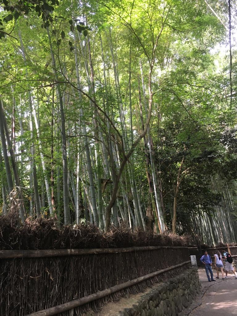 京都 竹林の道